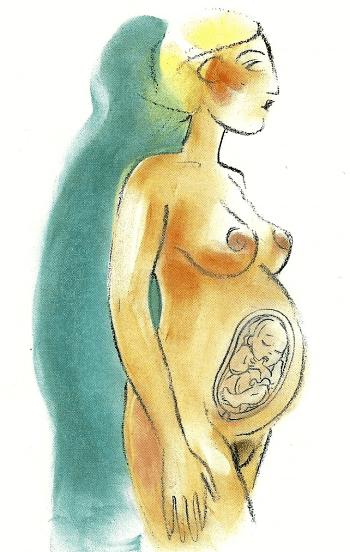 Schwangerschaft Achter Monat von der 33 bis zur 36 Woche