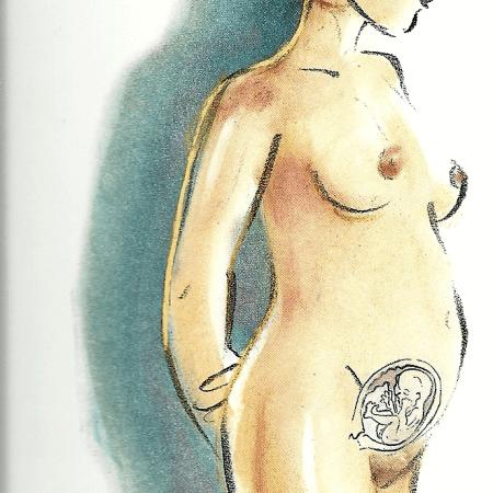 Schwangerschaft Fünfter Monat von der 17 bis zur 20 Woche
