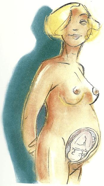 Schwangerschaft Siebter Monat von der 25 bis zur 28 Woche